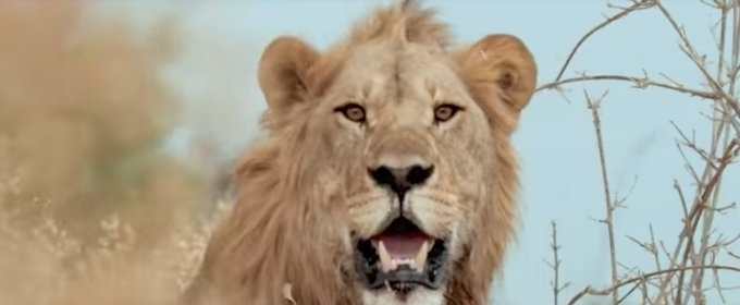 VIDEO: Sneak Peek - Nat Geo WILD's SAVAGE KINGDOM: UPRISING Returns 11/24