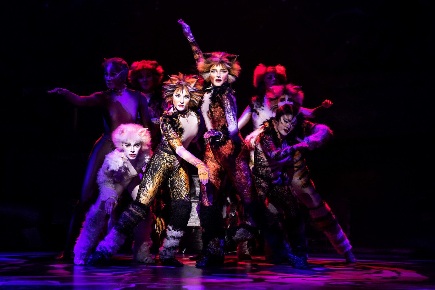 BWW Review: CATS at Popejoy Hall