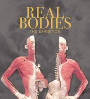 REAL BODIES The Exhibition Premieres In Sydney