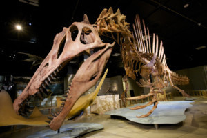The McCoy To Host National Geographic Live's SPINOSAURUS: LOST GIANT OF THE CRETACEOUS