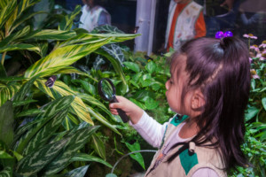 Live Butterflies Return To American Museum of Natural History This Fall