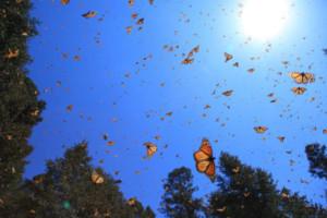 FLIGHT OF THE BUTTERFLIES Soars Back On Screen, 11/2