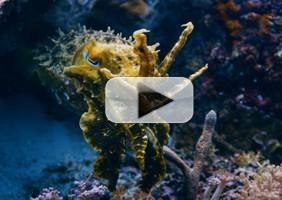 VIDEO: Sneak Peek - BBC America Premieres Next Installment of PLANET EARTH, 1/20