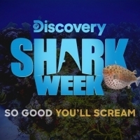 Rob Riggle Returns to SHARK WEEK with SHARK TRIP: EAT. PREY. CHUM