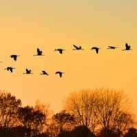 Experience BIRDS OF NORTH AMERICA Outdoors At Theater With A View