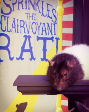 THE RAT MENTALIST Comes to Hollywood Fringe