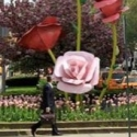 The Roses Set To Close Display On Park Avenue Malls 5/31