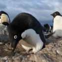 Discovery Channel's FROZEN PLANET to Premiere 3/18