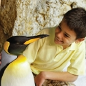 Discovery and SeaWorld Announce Live Feed 'Penquin Cam' for FROZEN PLANET