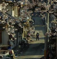 HBO to Debut TSUNAMI & THE CHERRY BLOSSOM Documentary, 7/16