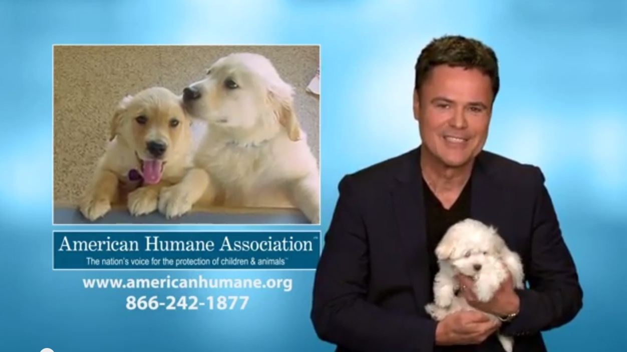American Humane Association Unveils 'Puppy Love' PSA Starring Donny Osmond