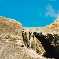 VIDEO: First Trailer for ISLAND OF LEMURS: MADAGASCAR, Narrated by Morgan Freeman