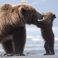 VIDEO: Get a First Look at Disneynature's BEARS