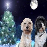 STAGE TUBE: Michael Ball Sends Holiday Greetings from His Pets!