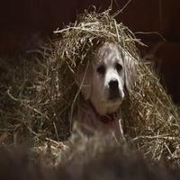 VIDEO: Watch Budweiser's Super Bowl Commercial 'Lost Dog'