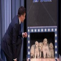 VIDEO: Puppies Predict the 2015 Final Four Championship on TONIGHT SHOW
