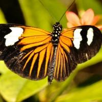 The American Museum of Natural History Presents THE BUTTERFLY CONSERVATORY, Now thru 5/25