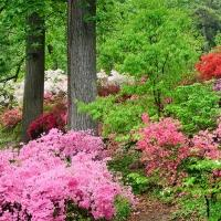 BWW Reviews: Dogwoods and Azaleas Spell Springtime in Pigeon Forge