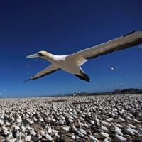 EARTHFLIGHT to Take to the Skies in New Six-Part Miniseries on PBS