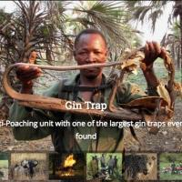 Conrad Evart Launches Kickstarter Campaign to Produce Documentary on Anti-Poaching