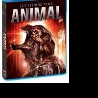 Scream Factory to Release New Feature Film ANIMAL 2/17
