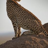 Natural Habitat Adventures Unveils 'Wildlife Photo of the Day' Site