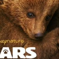 VIDEO: First Look - All-New Trailer for Disneynature's BEARS