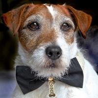 THE ARTIST's Uggie is Named Spokesdog for The Humane Society of the United States' Pets of Valor Award