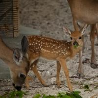 PBS's NATURE Explores the Private Life of Deer Tonight