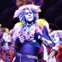 BWW Review: Legendary Broadway Musical CATS Enchants Audiences at the Norris Theatre