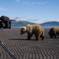 Discovery Premieres GREAT BEAR STAKEOUT Tonight