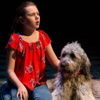 BWW Review BECAUSE OF WINN DIXIE at Delaware Theatre Company