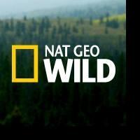 Nat Geo WILD Premieres New Series SAFARI LIVE Today