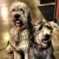 Pooches Pal Around Behind The Scenes Of PETER PAN LIVE!