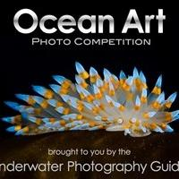 2013 Ocean Art Underwater Photo Competition Announced
