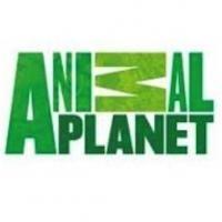 Animal Planet Scores Best Quarter Yet in Key Demos