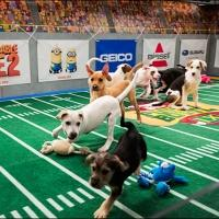 10th Annual PUPPY BOWL Returns to Animal Planet Today