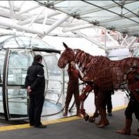 Photo Flash: WAR HORSE Equine Star Joey Celebrates 2,000 Performances in the West End