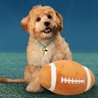 Win a Trip for Four to Puppy Bowl XI in NYC!