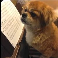 STAGE TUBE: Trailer - Contreras, Cronin & More Set for INSPIRED 3 Benefit for Animal Rescue Orgs