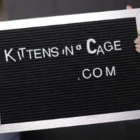 First Trailer For Play-Based Web Series KITTENS IN A CAGE