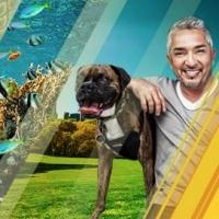 Nat Geo WILD Announces Refreshing Summer Programming Slate