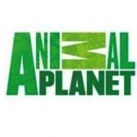 May 2013 Marks Animal Planet's Most-Watched Month Ever