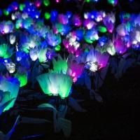 LIGHTSCAPES Returns to the Hudson Valley This Month