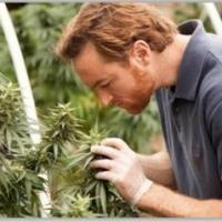 Discovery Channel Premieres Six-Part Series WEED COUNTRY Tonight