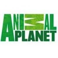 Animal Planet Scores New Summer Ratings Record