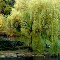 The City of New York Parks & Recreation Announces Photography Exhibition