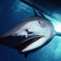 NBCSN to Air SHARK HUNTERS Finale Tomorrow
