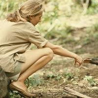 Jane Goodall to Introduce Nat Geo Wild's 2-Hour Event KINGDOM OF THE APES