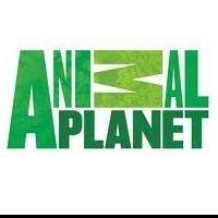Animal Planet Announces Dramatic Upfront Slate